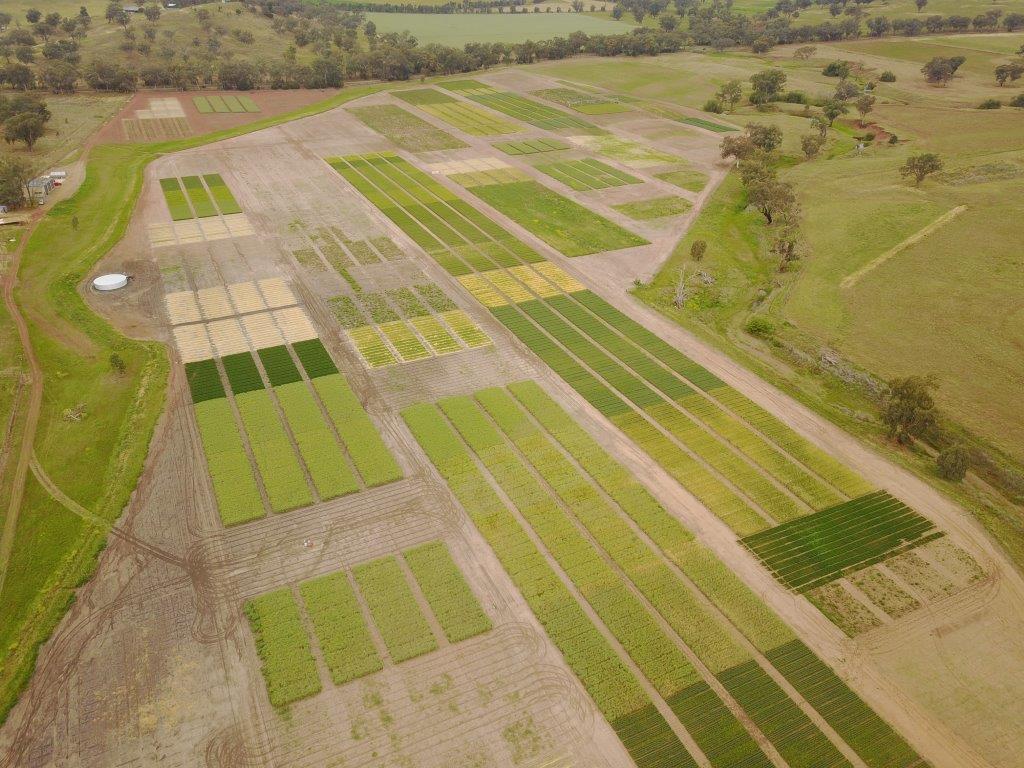 tamworth crop solutions farming