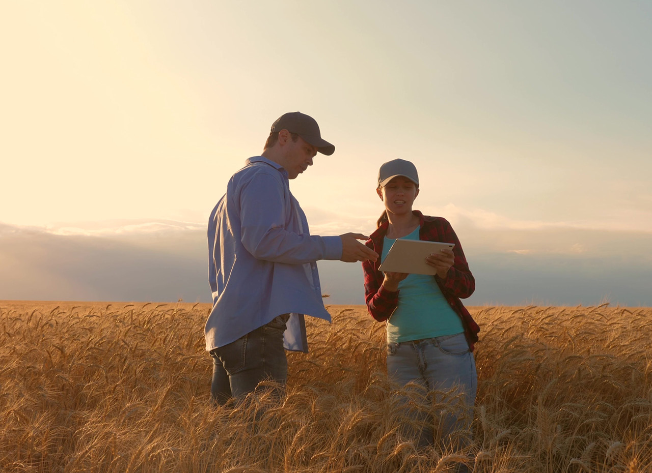 famers in a field