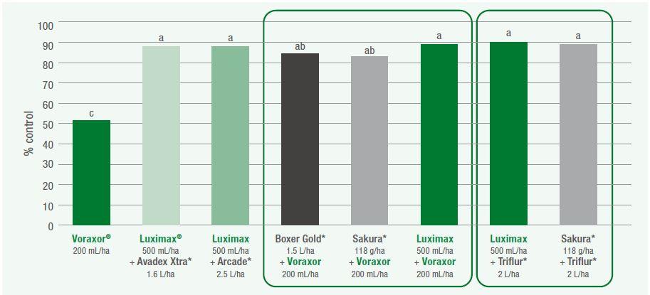 Annual ryegrass control graph